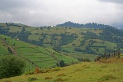 Зеленые холмы Polonina Карпат Вид на загородную местность стоковые фотографии rf