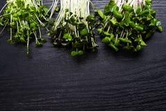 Зеленые цвета витамина микро- для потери веса, detoxification и противостарителя скопируйте космос стоковые изображения