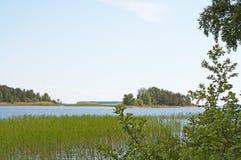 Зеленые цвета и син лета в тростниках стоковые фото