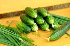 зеленые цвета огурцов урожая новые Стоковая Фотография RF