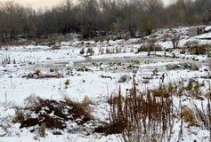 Зеленые цвета под снегом 10 Стоковое фото RF
