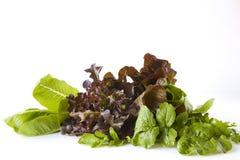 Зеленые цвета салата, травы еда здоровая стоковые изображения rf