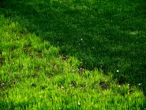 зеленые цвета травы текстурируют детенышей Стоковые Изображения