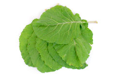 зеленые цвета collard Стоковое фото RF