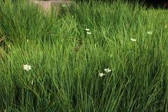 Зеленые цветки в саде стоковая фотография