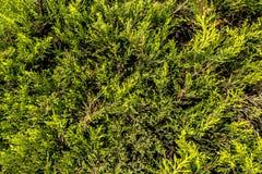 Зеленые цветки на луге стоковые фото