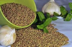 зеленые чечевицы Стоковая Фотография