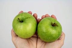 Зеленые яблоки, который держат в руках стоковое изображение rf