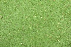 Зеленые gress Стоковые Фотографии RF