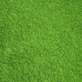 Зеленые gress Стоковое Изображение