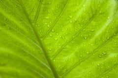 зеленые raindrops листьев тропические Стоковые Фото