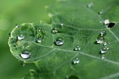зеленые raindrops листьев Стоковое Фото