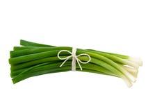зеленые shallots Стоковые Фото