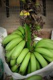 Зеленый банан Стоковые Изображения RF