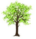 зеленый вал весны иллюстрация штока