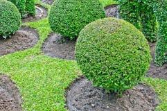 Зеленый вал в саде Стоковое Фото