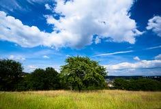 Зеленый вал лета и голубое небо Стоковое Изображение RF