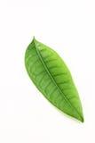 зеленый вал листьев Стоковое Фото