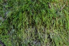 зеленый вал мха Стоковое фото RF