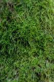 зеленый вал мха Стоковое Изображение RF