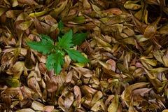 Зеленый вал на сухой предпосылке листьев. Стоковые Фотографии RF