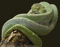 зеленый вал питона 2 Стоковые Изображения