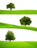 зеленый вал природы Стоковые Изображения
