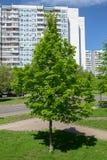 зеленый вал Разделенное молодое дерево Стоковые Изображения
