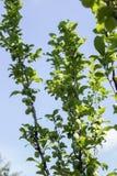 зеленый вал слив Стоковая Фотография RF
