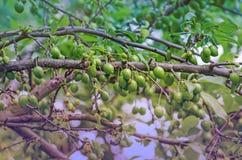 зеленый вал слив Стоковое Изображение RF