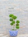 Зеленый вал с каменной стеной Стоковое Фото