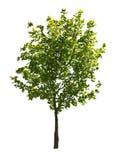 зеленый вал Стоковые Фотографии RF