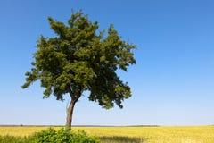 Зеленый вал Стоковые Изображения RF