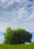 зеленый вал Стоковое Изображение RF