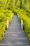 Зеленый взгляд лесов лесов мангровы, тропических и прибрежных Стоковая Фотография