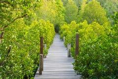 Зеленый взгляд лесов лесов мангровы, тропических и прибрежных Стоковое Изображение