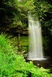 зеленый водопад treees Стоковые Фотографии RF