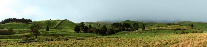 Зеленый выгон на горном склоне Стоковая Фотография