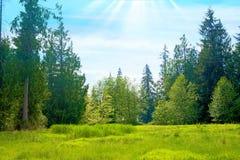 Зеленый выгон с высокими деревьями стоковые фотографии rf