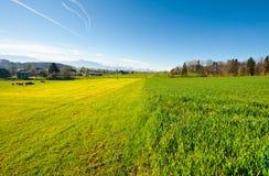 Зеленый выгон Стоковая Фотография