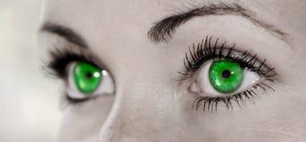 Зеленый глаз - красивейший, женственно Стоковое фото RF