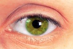 Зеленый глаз Стоковые Изображения