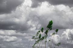 Зеленый год сбора винограда дерева тонизировал, небо и заволакивает черно-белая предпосылка Творческое сделанное из зеленых листь Стоковое Изображение RF