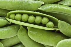зеленый горох Стоковое фото RF