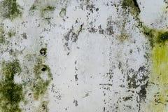 Зеленый грибок на старой стене Стоковое Изображение