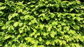 Зеленый детеныш выходит загородки стоковое фото rf