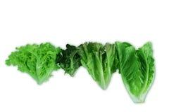 Зеленый дуб, красный дуб, красный Cos, красный салат лист, hydroponic, органический, собрание салата овощей Стоковое Изображение