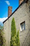 Зеленый завод альпиниста на стене старого дома Стоковые Изображения