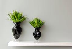 Зеленый завод в вазе украшенной для комнаты Стоковое фото RF