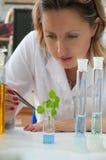 зеленый завод исследуя научного работника Стоковые Изображения